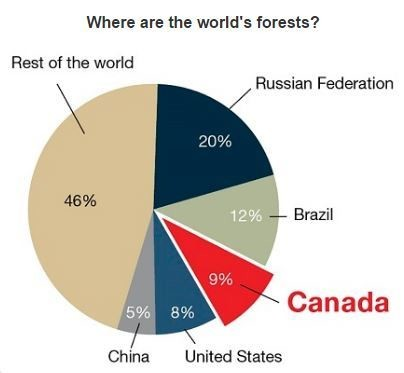 Where are the world's forests?