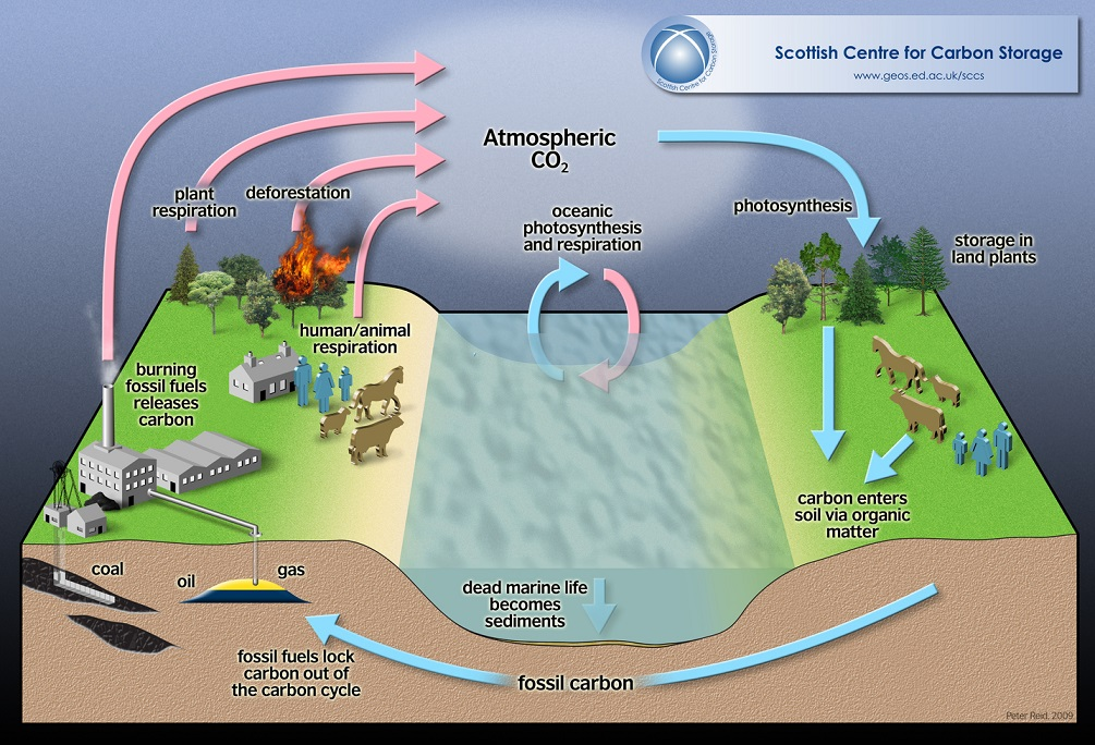 150319-carbon cycle graphic