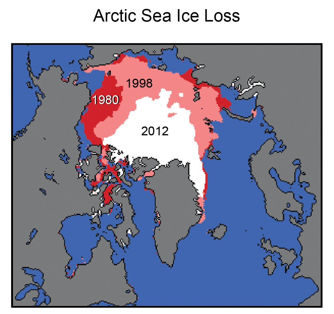 Arctic summer sea ice
