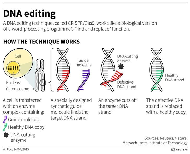 151222-CRISPR gene editing technique Reuters